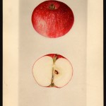 USDA restricting access to 7,584 fruit paintings